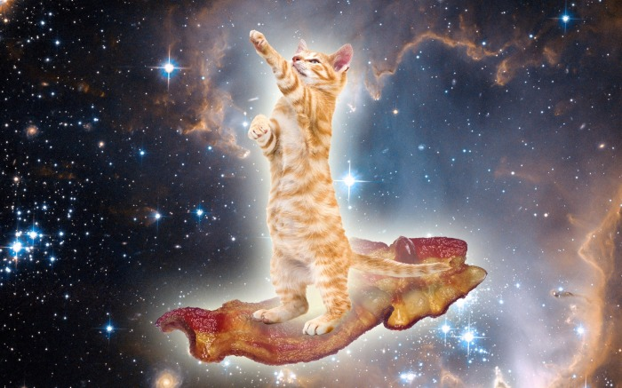 BaconSpaceKitty